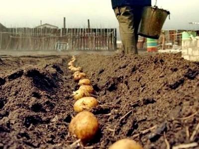 Посевной календарь для посадки картофеля и овощей в апреле