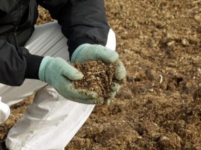 Подготавливаем почву после уборки картофеля