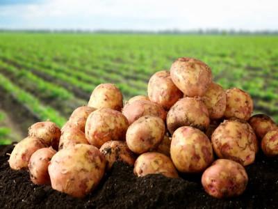 Выбираем картофелекопалку к мотоблоку